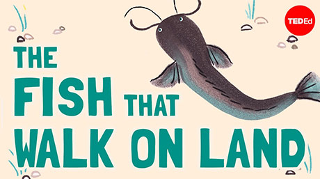 """Music for """"The Fish That Walk on Land"""" for Ted-Ed"""